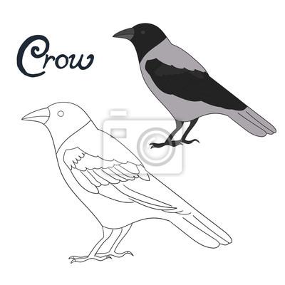 Gra Edukacyjna Kolorowanka Kruk Ptak Wektor Fototapeta