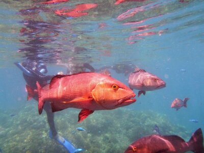Fototapeta Great Barrier Reef Ryby