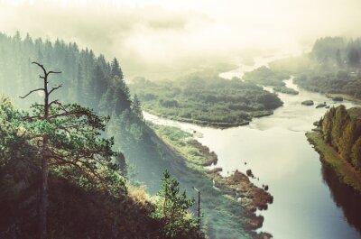 Fototapeta grube poranna mgła w lesie iglastym. drzewa iglaste, zarośla zielonym lesie.