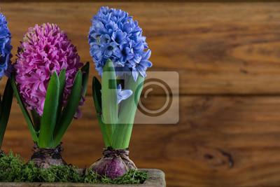 Fototapeta Grupa świeżych Wiosennych Kwiatów W żarówki Doniczki Ceramiczne