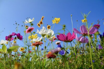 Fototapeta Grußkarte - Bunte Blumenwiese - Sommerblumen