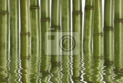 grzywny obraz różnych bambusa, tło charakter