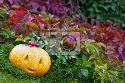 Fototapeta halloween funny pumpkin with a smile in autumn leaves
