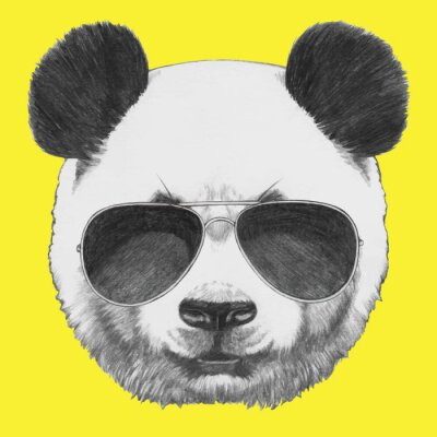 Fototapeta Hand drawn portrait of Panda with sunglasses. Vector isolated elements.