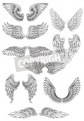 Heraldyczne Ptaków Lub Skrzydła Anioła Zestaw Samodzielnie Na