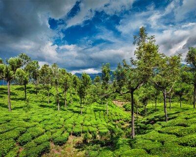 Fototapeta Herbata plantacji w górach
