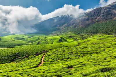 Fototapeta Herbata plantacji w Indiach