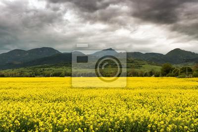 Hill Choc i pola rzepaku, Słowacja
