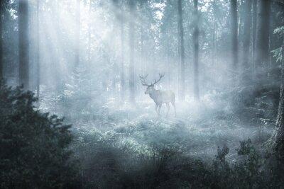 Fototapeta Hirsch im nebeligen Wald