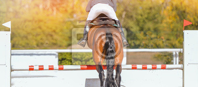 Fototapeta Horse horizontal banner for website header design. Rider in uniform perfoming jump at show jumping competition. Blur sunlight green trees as background.