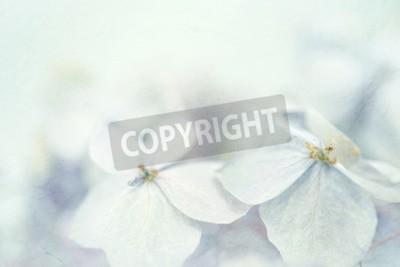 Fototapeta Hortensje w stylu zimowych na morwy papieru tekstury dla tła