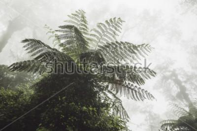 Fototapeta Huge fern in mystical tropical forest in fog. Jurassic period atmosphere