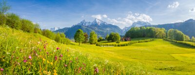 Fototapeta Idyllic mountain scenery in the Alps with blooming meadows in springtime