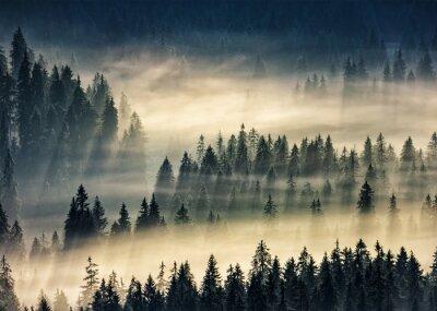 Fototapeta iglastego lasu w mglisty górach