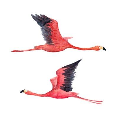 Fototapeta Ilustracja akwarela flamingo