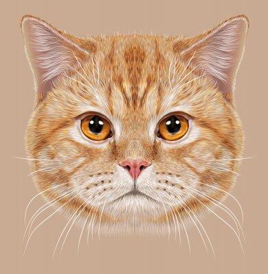 Fototapeta Ilustracja Portret kot brytyjski krótkowłosy Kot.