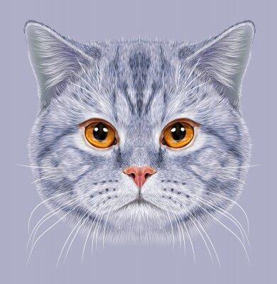 Fototapeta Ilustracja Portret kot brytyjski krótkowłosy Kot. Słodkie szary pręgowany kot domowy z pomarańczowymi oczami.