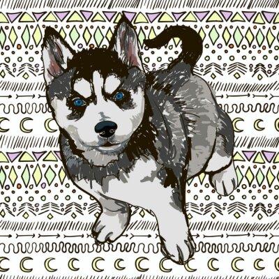 Fototapeta Ilustracja psa rasy Husky