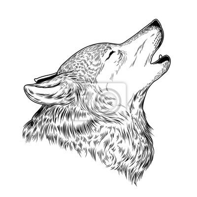 Fototapeta Ilustracja Wyjącego Wilka