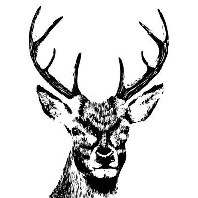 Fototapeta Ilustracja z głową jelenia, grunge, sylwetka wyizolowanych na białym tle