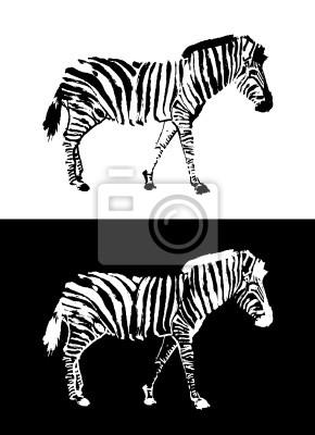 Zebra w negatywie