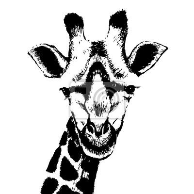 Czarno biała żyrafa