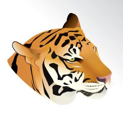 Fototapeta Ilustracji wektorowych głowa tygrysa portret wyizolowanych na białym tle.