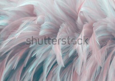 Fototapeta Image nature art of wings bird,Soft pastel detail of design,chicken feather texture,white fluffy twirled on transparent background wallpaper Abstract. Coral Pink color trends and  vintage.