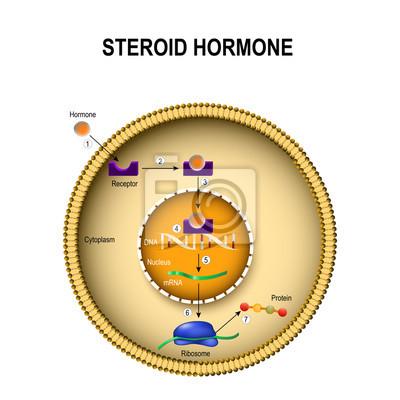 hormony z montażu