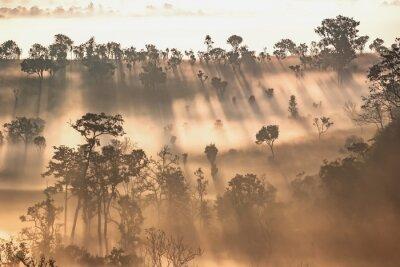 Fototapeta Jasny wschód słońca na wiosennym lesie