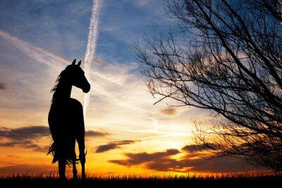 Fototapeta Jazda sylwetka na zachodzie słońca
