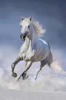 Fototapeta Jazda w śniegu