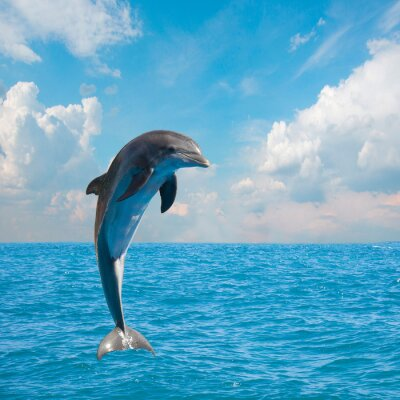 Fototapeta jeden delfiny skoków
