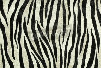 Fototapeta Jednolite kolorowe tekstury tygrys