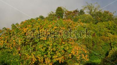 Fototapeta Jesień las na górze Annapurna masyw, Nepal.