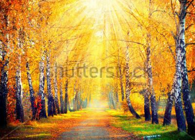 Fototapeta Jesień. Spadek. Jesienny Park. Jesienne drzewa i liście w promieniach słońca. Piękna jesień scena