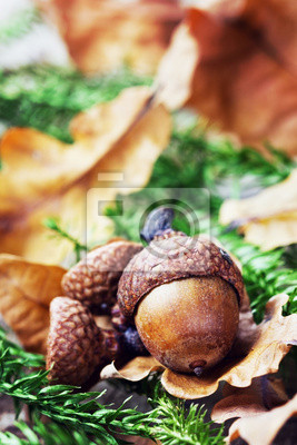 jesień z żołędzi i liści dębu