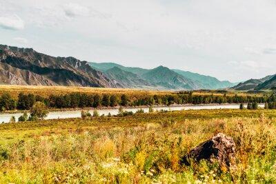 Fototapeta Jesienią krajobraz z gór w tle i suchego natury traw na łące na pierwszym planie, rzeki Katun z sosny na riversides, teal mglisty horyzont, Ałtaj, Kuyus dzielnicy, Rosja
