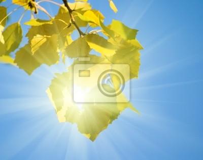 Jesienią liście osiki