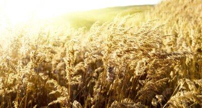 jesienią żółte trawy i słońca