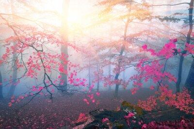 Fototapeta Jesienna mgła