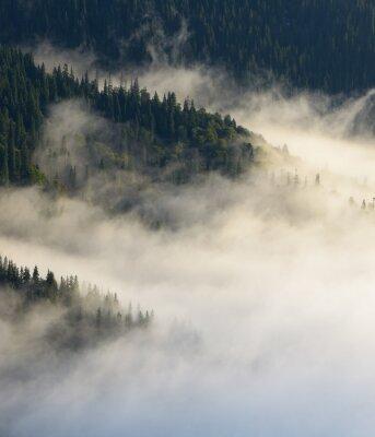 Fototapeta Jesienny krajobraz z lasu jodłowego na zboczach górskich
