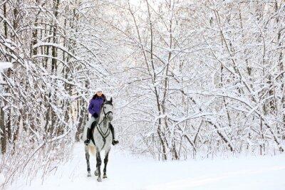 Fototapeta Jeździec na koniu na skraju lasy pokryte śniegiem w zimie