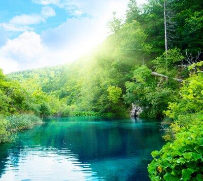jezioro w głębokim lesie