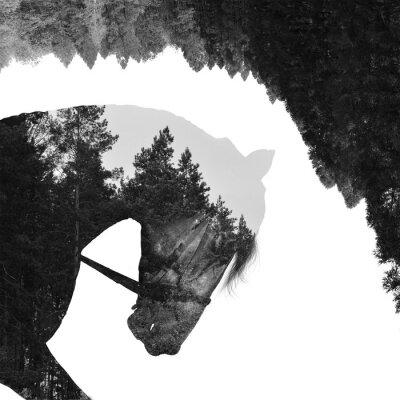 Fototapeta Jodłowy wewnątrz konia w sztuce, multiexposition