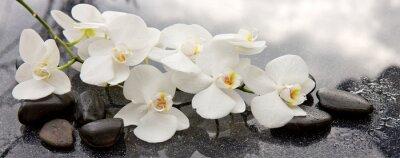 Fototapeta Kamienie spa i białej orchidei na szarym tle.