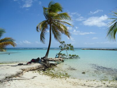 Fototapeta Karaiby Plaża