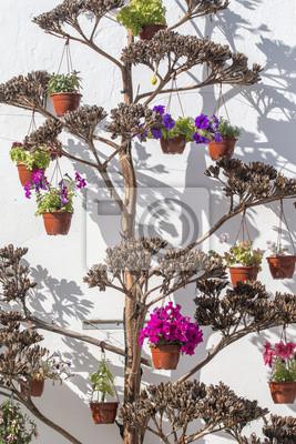 Fototapeta Kilka Doniczki Z Kwiatami Wiszące Na Drzewie