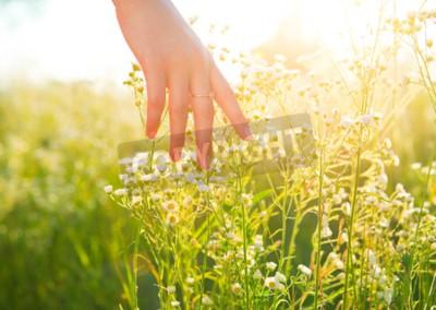 Fototapeta Kobieta r? Ki biegnie przez pole łąki z dzikimi kwiatami