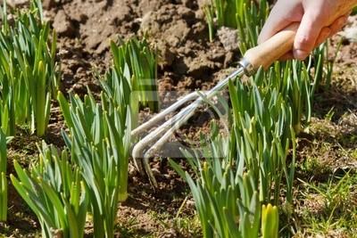 Fototapeta kobiety strony pracy gleby aroung pędy kwiatowe